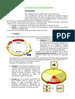 10 Ciclo y División Celulares