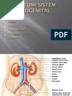 Anatomi Sistem Urogenital