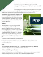 03_Menu di esempio - PiattoVeg.pdf