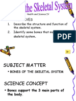 Bones of the Skeletal System