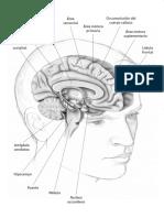 Plasticidad Cerebral Restak