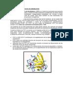 Factores de Crecimiento de Los Fibroblastos