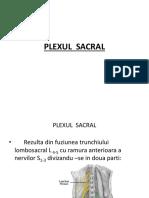 plexul lombo sacrat