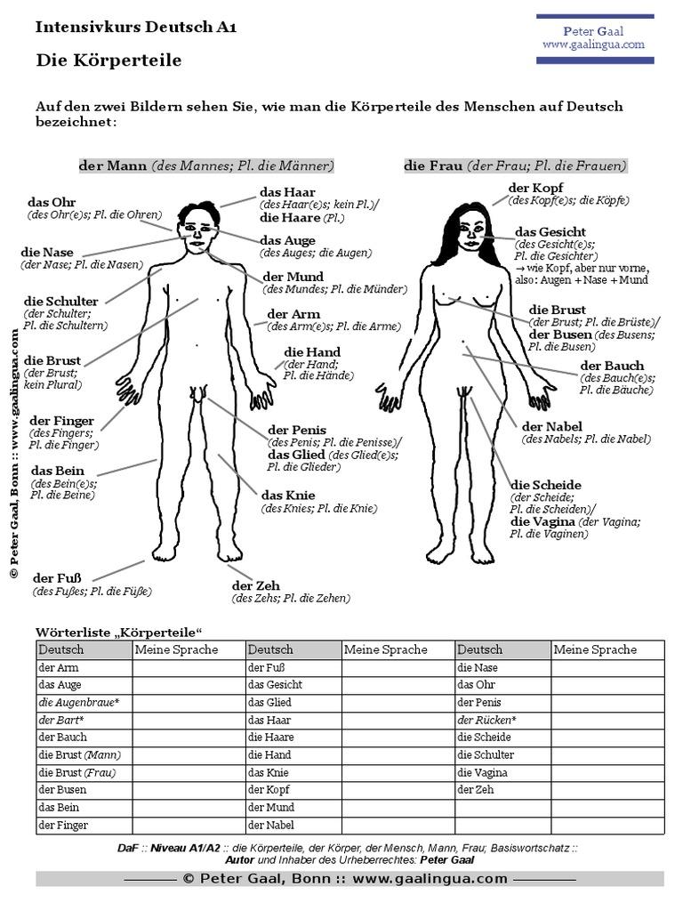 Groß Die Körperteile Ideen - Menschliche Anatomie Bilder ...