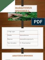 AMARANTHUS SPINOSUS L.pptx
