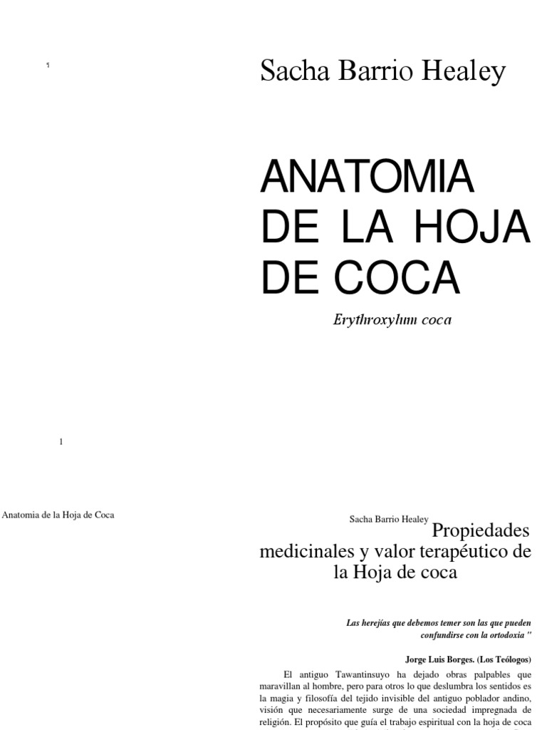 Anatomia de La Hoja de La Coca