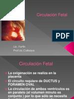 Circulacion Fetal Ii3