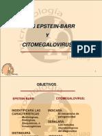 Citomegalovirus y Epstein Barr