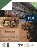 Manejo de Las Abejas Nativas Melipona Beecheii y Scaptotrigona Mexicana