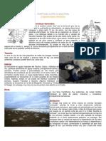 Características de la tortuga golfina.pdf