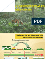 Sistemas Agroforestales Cacao