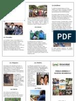 Trifolio Grupo #3 Pueblos Indigenas de HN
