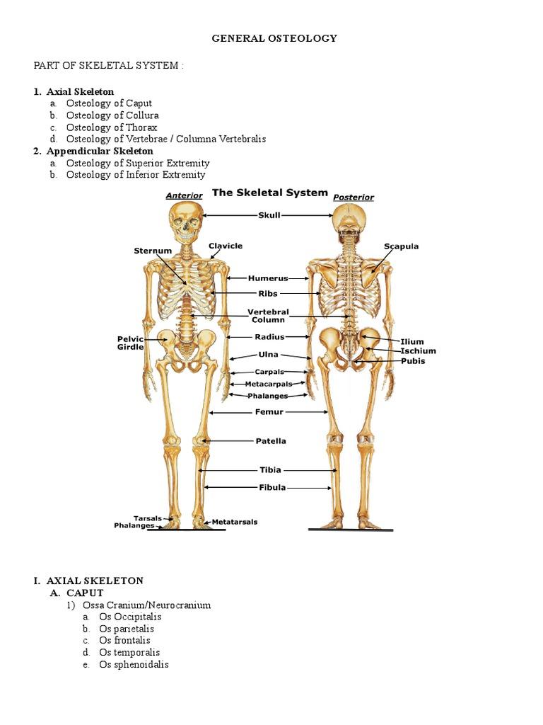 MODUL ANATOMY BLOK 2-2.doc