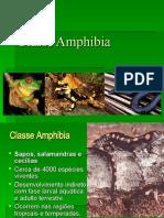 Cópia de Classe Amphibia