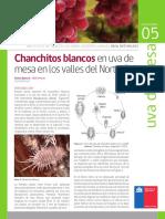 FICHA 05 Chanchitos Blancos