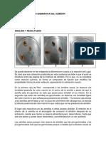 INFORME HIDRÓLISIS ENZIMATICA DEL ALMIDÓN.docx