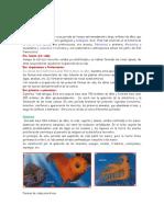 PERIODOFICACION.docx