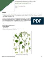 Propiedades y Usos Medicinales Del Anís (Pimpinella Anisum L.). Tlahui - Medic No