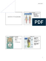 Anatomy of Abdomen PDF