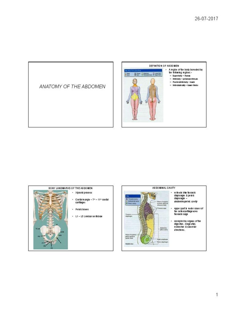 Anatomy of abdomen pdf abdomen pelvis ccuart Images