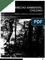 Dereco Ambiental Chileno - Rodrigo Guzman