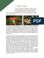 los hongos, tipos de hongos y su reproduccion
