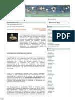 braquiopodos.pdf