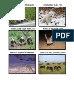 ANIMALES DE CLIMA CÁLIDO.docx
