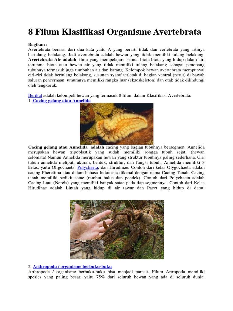 8 Filum Klasifikasi Organisme Avertebrata