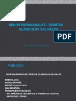 Senos Paranasales ,Orb.,g.s