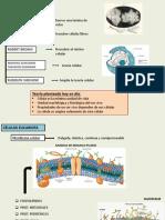 CITOLOGIA BASICA.pptx