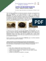 BUSCADORES DE METEORITOS.pdf