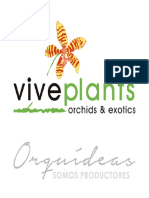 Vive Plants