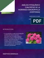 Análisis Fitoquímico Cualitativo de La Hortensia