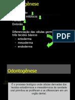 Copia de Odontogenese 2010