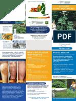 Giant Hogweed brochure