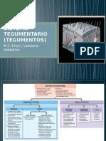 SISTEMA TEGUMENTARIO (TEGUMENTOS).pptx