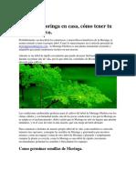 Como Plantar Moringa