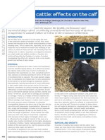 Dystocia in Cattle Effects on the Calf