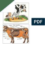 Exposicion Sobre La Vaca