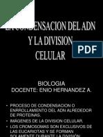 La Formacion Del Cromosoma y Division Celular