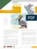 Pelicano Peruano