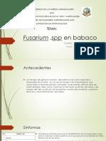 Fusarium en babaco