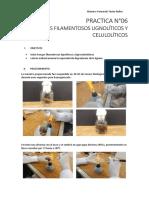 PRACTICA N6 HONGOS FILAMENTOSOS LIGNOLÍTICOS Y CELULOLÍTICOS