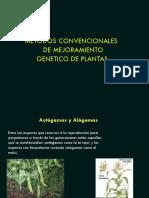 Clase N_ 8 Mejoramiento de Plantas Autogamas