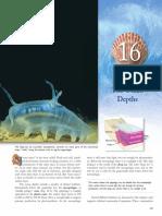 marinebioweek15