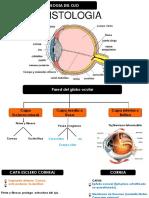 Histologia de Los Organos Receptores