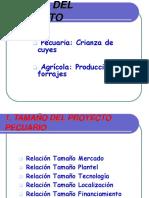 Proyecto Cuyes II