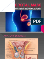 Scrotal Mass Ppt