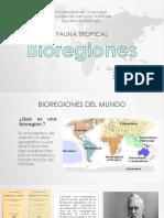 Bio Region Es